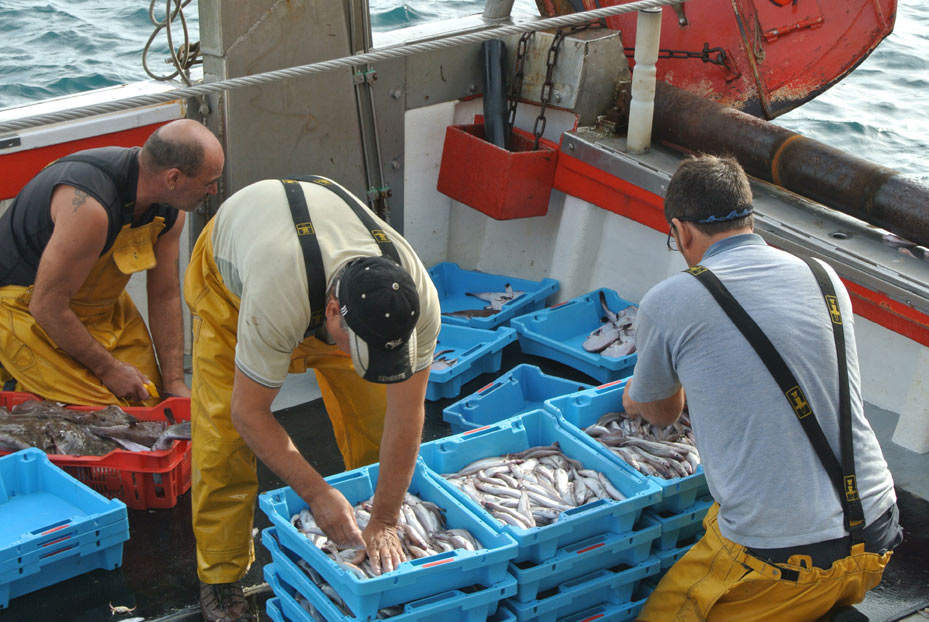 Sorting the catch in Palamos