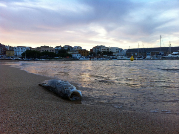 dead-fish-Palamos-beach